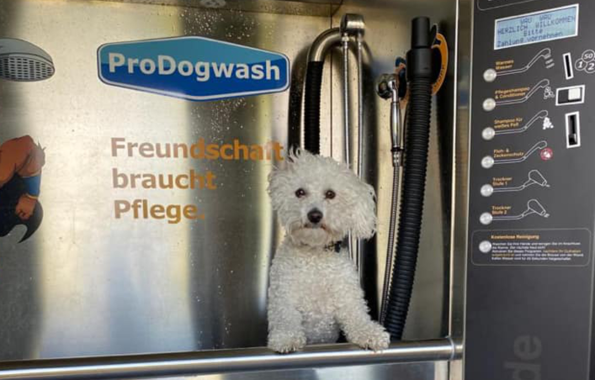 Hund in Waschanlage