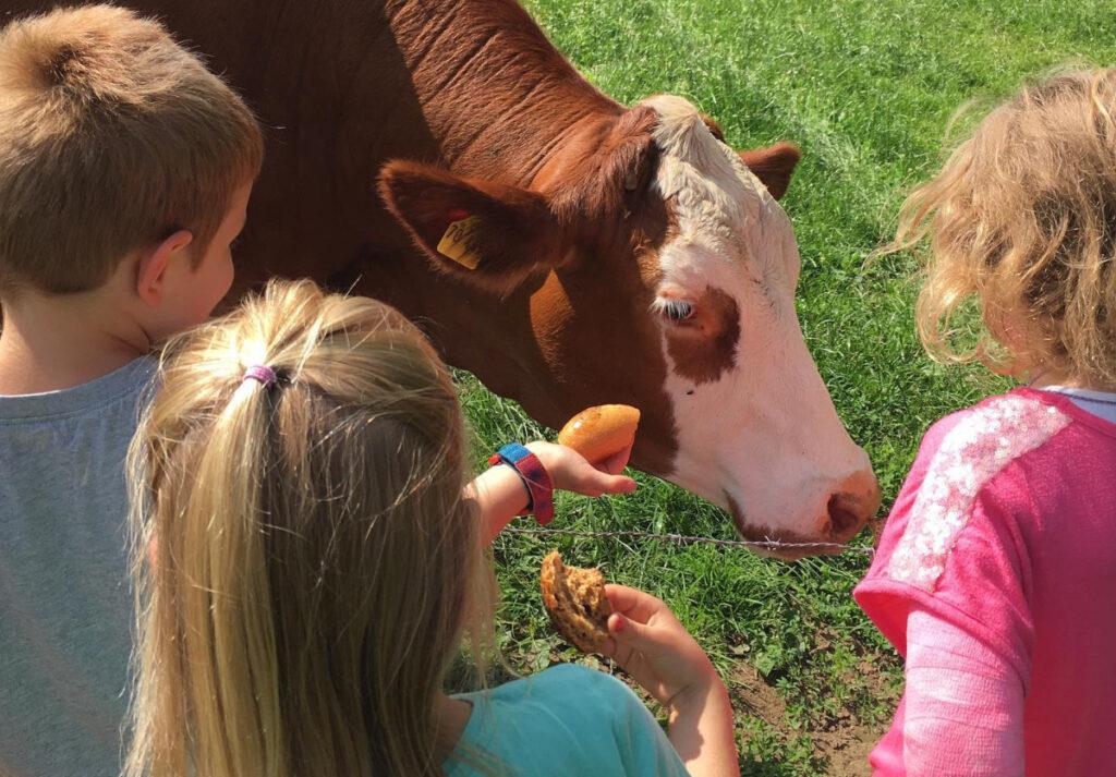 Kinder bei einer Kuh
