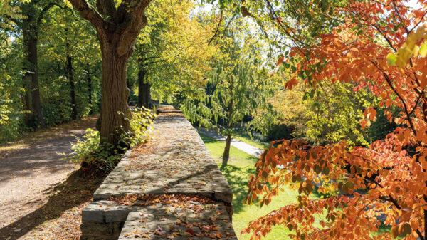 Alte Steinmauer vor Bäumen