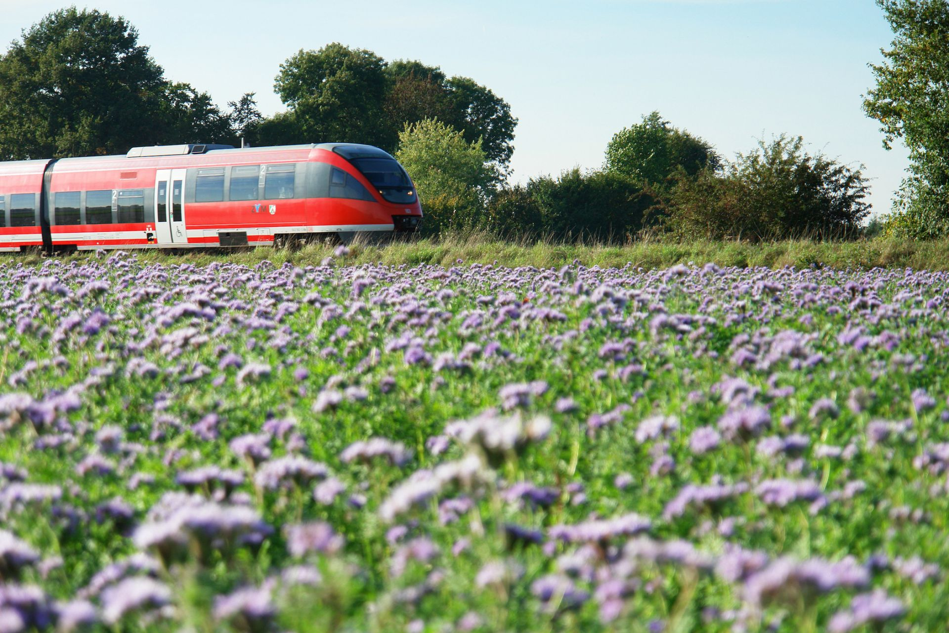 Zug und Blumenwiese