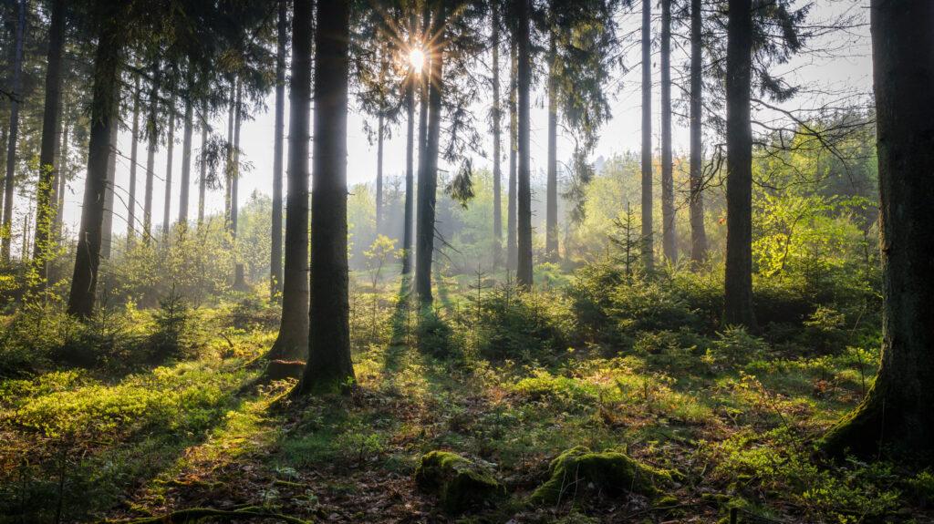 Sonneneinstrahlung im Wald